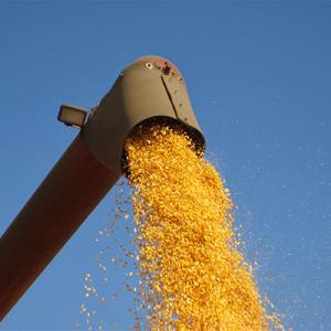 Falling Corn